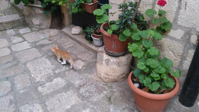 dubrovnik-cat (1)