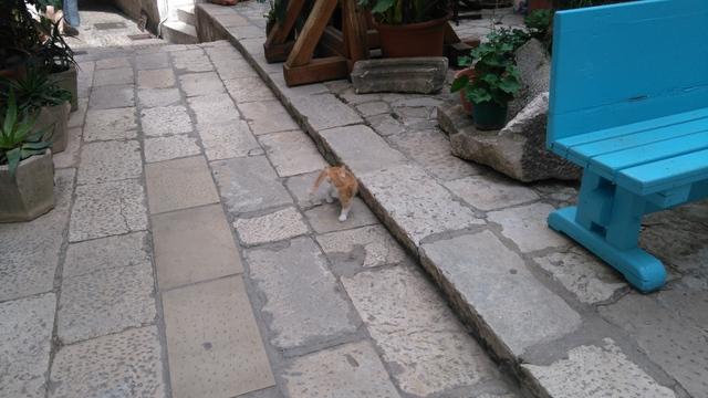 dubrovnik-cat (4)
