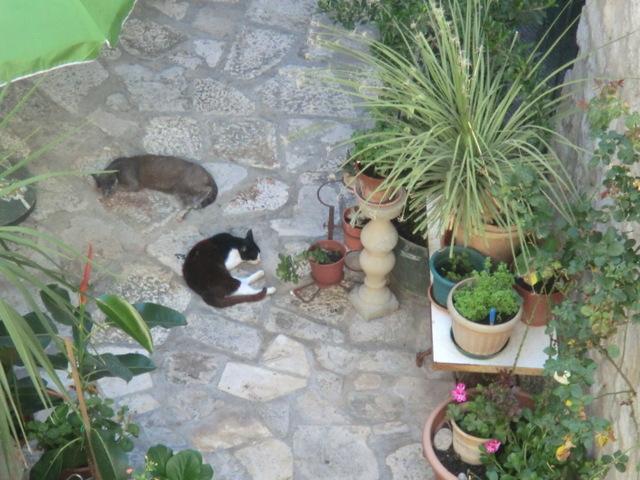 dubrovnik-cat-street (2)