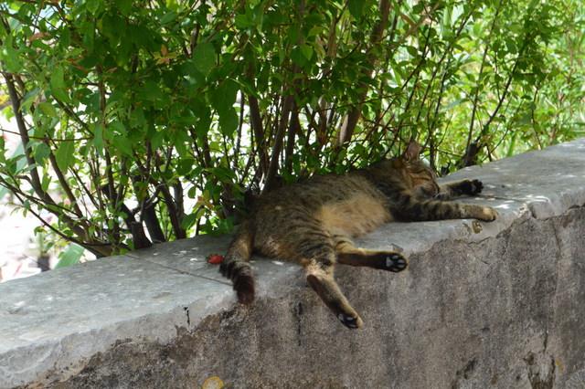爆睡中のネコちゃん