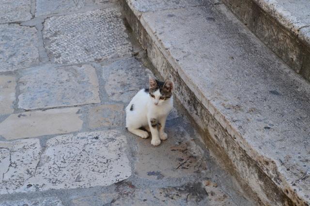 迷子かな?可愛い子猫