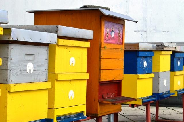 オフィスビルの屋上に設置されたハチの巣箱